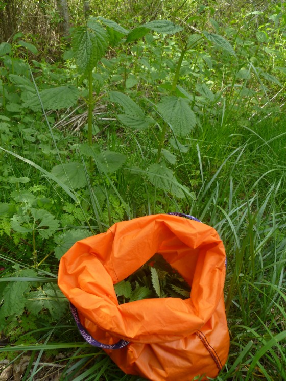 stinging nettles, in the ground and in the bag