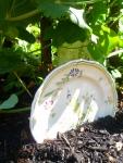 Garden Plates in the Garden