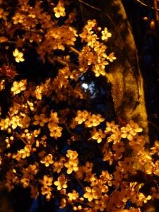 moon and blossoms © Rebecca Rockefeller