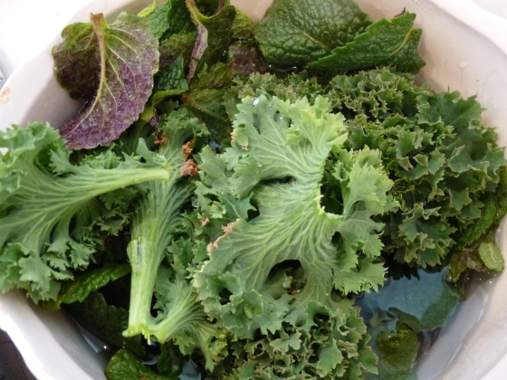 Fresh Kale and Mint for Pesto