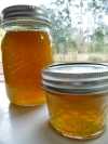 Eat Like a Bee: Dandelion Jelly