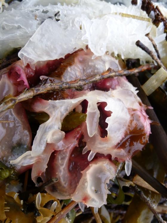 Turkish Towel Seaweed