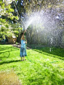 first sprinkler warm day of 2013 © Rebecca Rockefeller