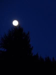 moon © Rebecca Rockefeller