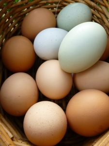 spring eggs © Rebecca Rockefeller