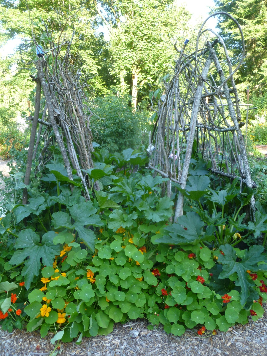Landscaping With Trellis : Diy garden trellis ideas rock farmer