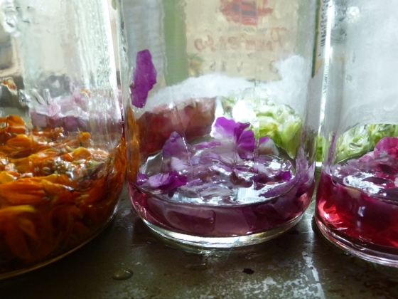 Petals and Boiling Water to Make DIY Ink photo