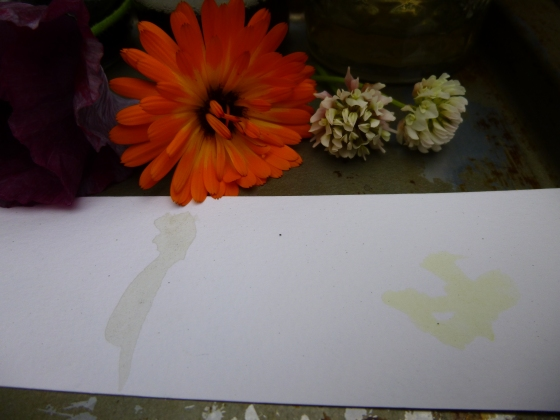Calendula and Clover DIY Flower Petal Ink