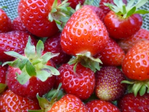 strawberries photo © Rebecca Rockefeller