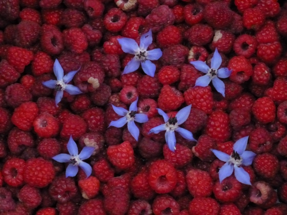 red, white, and blue from the garden photo © Rebecca Rockefeller