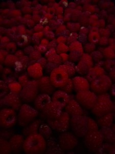 raspberries picked at dusk photo © Rebecca Rockefeller